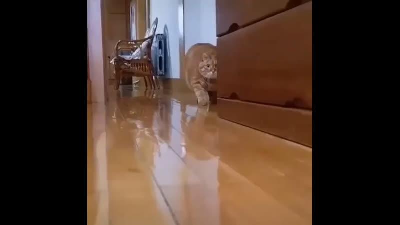Хищник