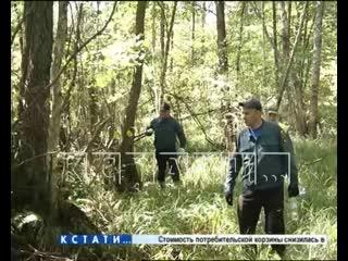 Вертолеты, полиция, военные, спасатели и волонтеры - третий день поисков пропавшей в лесу 5-летней девочки
