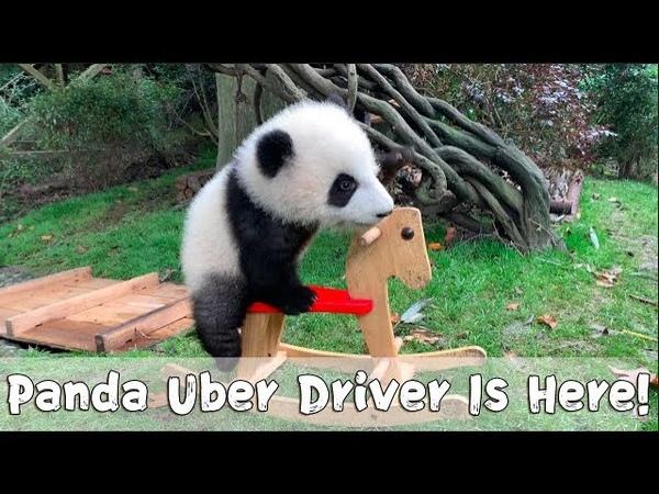 Cheng Lang Offering You A Ride iPanda