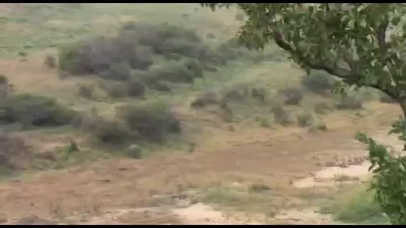 Охотники и жертва mp4