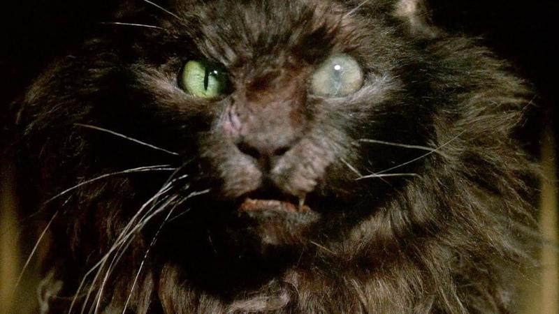 Ларс и Эрни привели в дом бешеного кота Мышиная охота отрывок из фильма