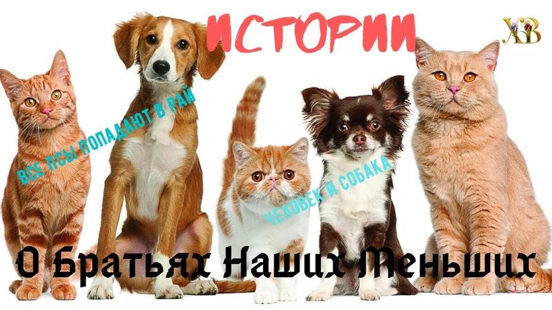 Все псы попадают в рай русский Хатико Человек и Собака Две ну очень интересные истории