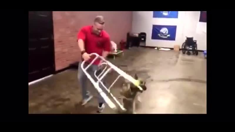 Пёс завалил все тесты на звание поводыря