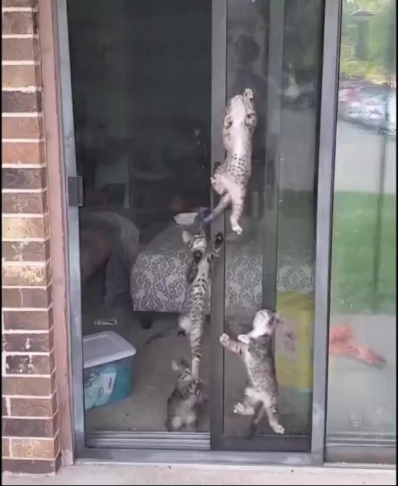 Котята на спецзадании