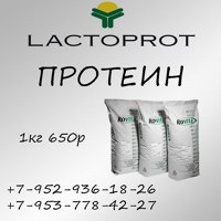 Фото Protein Lactomin