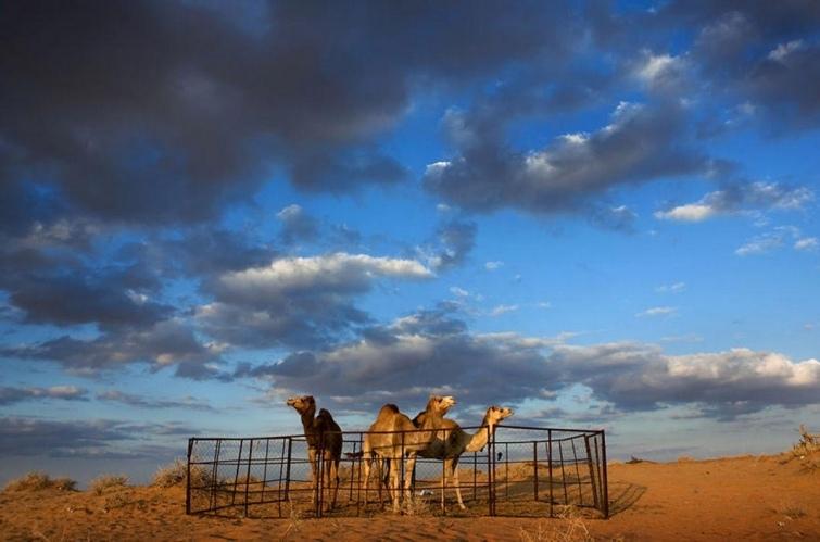 Страна без туристов или каково это жить в Саудовской Аравии, изображение №8