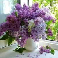 Фотография страницы Ларисы Соболевой ВКонтакте