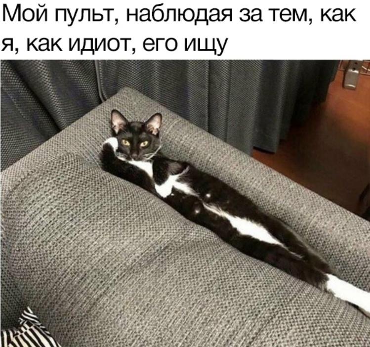 У меня у одного пульт не кот?