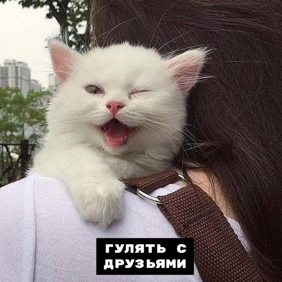 Как провести выходной, советы от котика