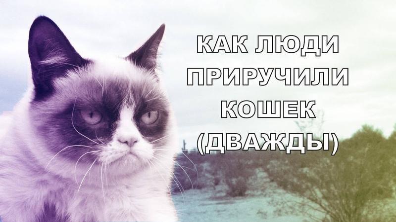 Одомашнивание кошек [Озвучка] | Study With Me | ДомаВместе