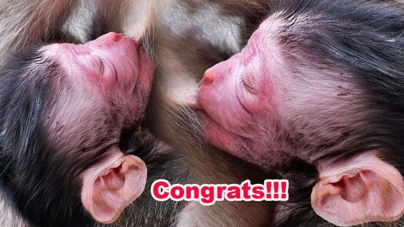Wow!! Congrats Cutest Newborn Baby - Lovely Mama Sashi Gave Birth This Morning - Adorable Wildlife