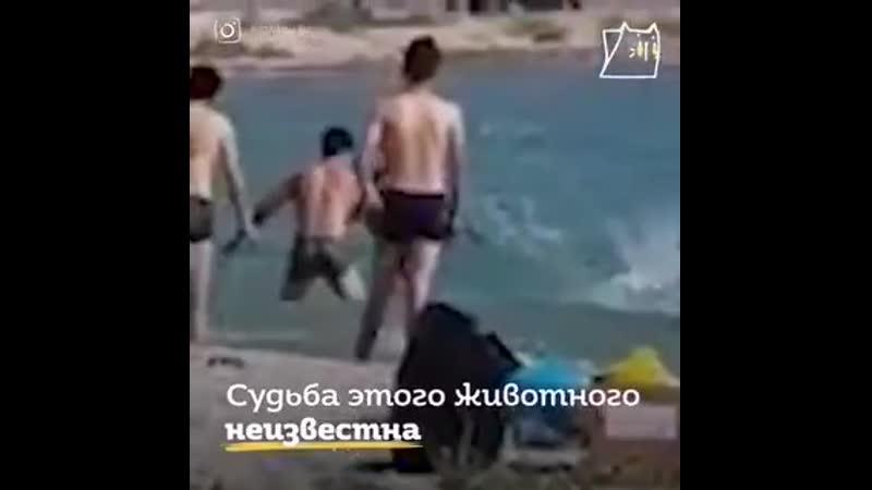 Дети забросали камнями детеныша каспийского тюленя который отважился подплыть поближе
