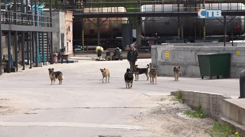 04 06 2020 Отлов собак в городе