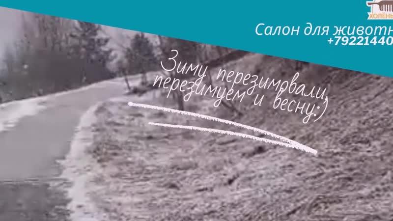 Зиму перезимовали, перезимуем и весну)
